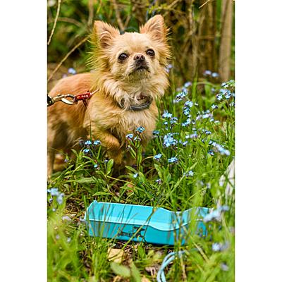 WALK DOG portable water bottle for dogs 500 ml,  light blue